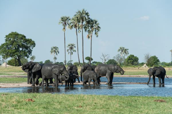 Giants of Hwange