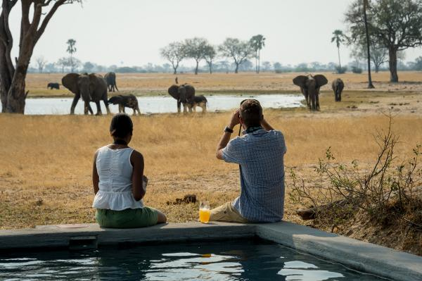 Game viewing from the pool