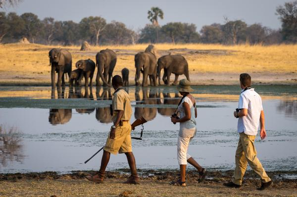Walking Safaris with a trained guide