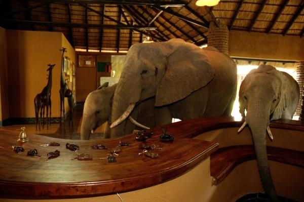 Elephant visitors in the hotel lobby