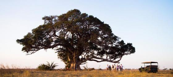 Enjoy sundowners under a tree after a game drive