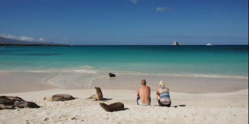 Couple sitting on a beach among sea lions