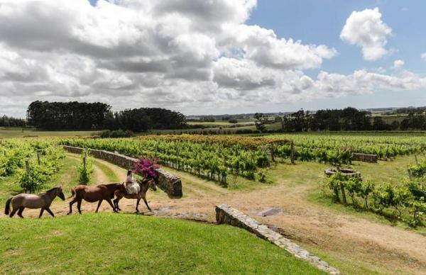 horses, vineyards, winery, uruguay