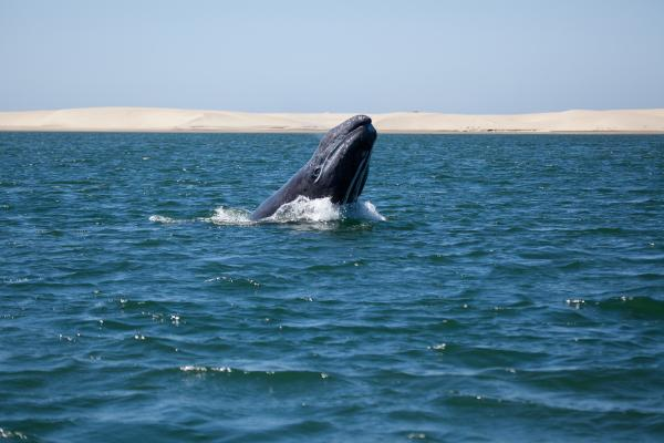 Gray Whale sighting