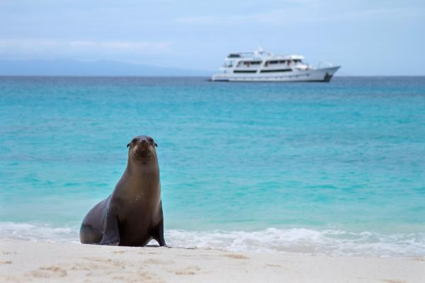 Cruise the Galapagos on the Odyssey ship