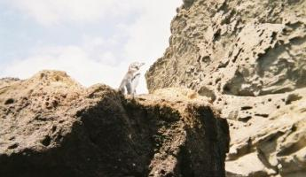 Exploring the Galapagos