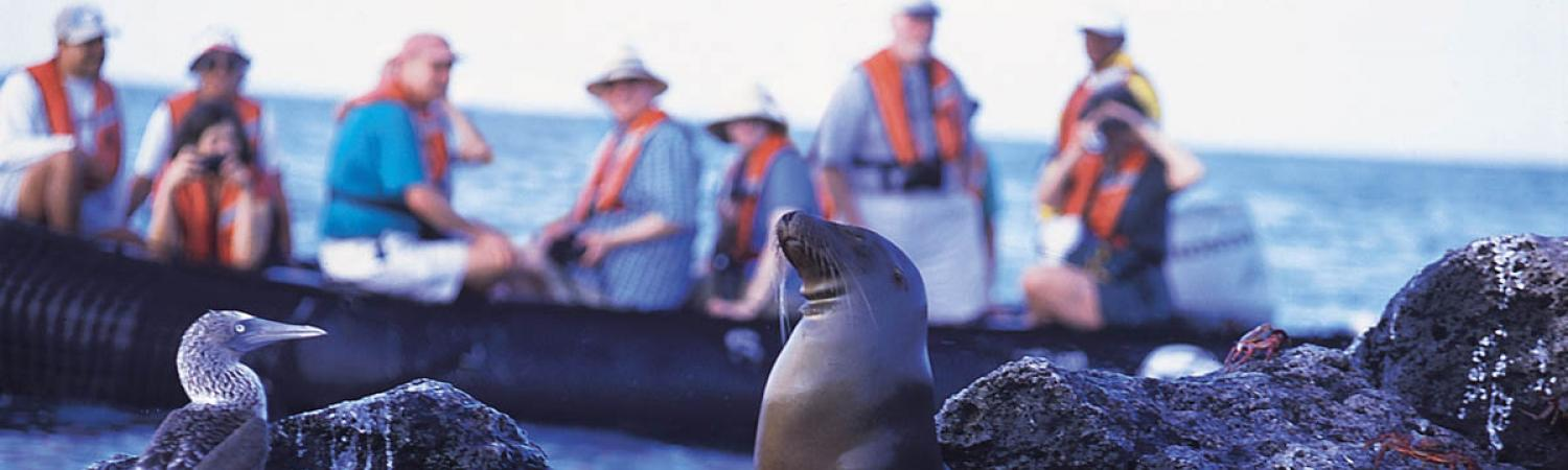 Travelers in a Zodiak watch a Blue-Footed Boobie and a Sea Lion in the Galapagos