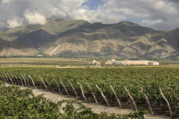 Vineyard at the base of mountains near Cafayate