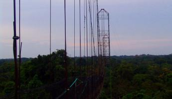 Jungle suspension bridge