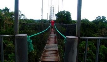 Suspension bridge in the rainforest canopy at Sacha Lodge