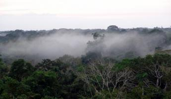 Fog in the jungle
