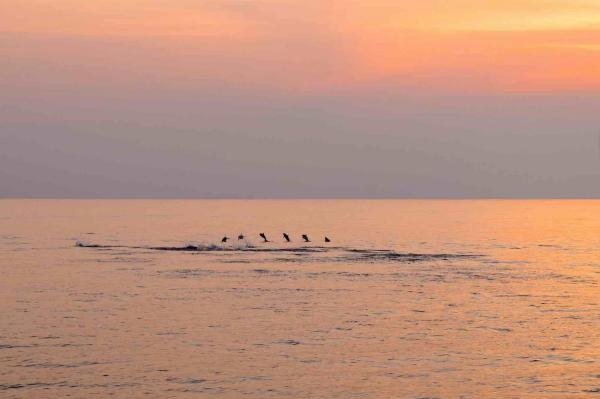 Dolphins accompany your cruise in the Andaman Islands