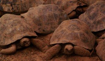 Tortoise group
