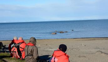 Watching Walrus from the beach at Kapp Lee.