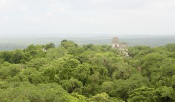 The view from the top of Temple IV at Tikal