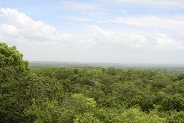 The breathtaking view from the top of Temple IV at Tikal