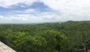 Finally made it to the top of Temple IV at Tikal