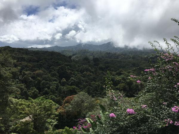 Our view while eating lunch at the La Paz Waterfall Gardens
