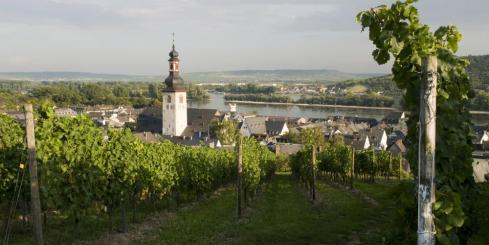 Explore the famous vineyards of Rudesheim