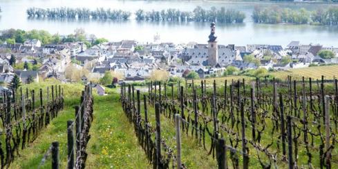 Observe Rudesheim's famous vineyards