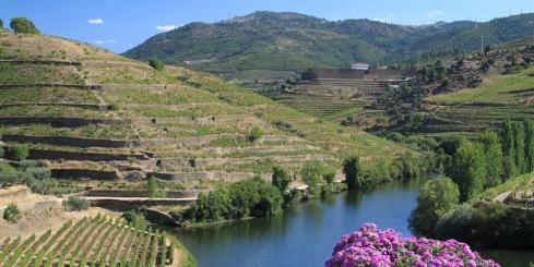 Sail across the heart of Porto vineyards