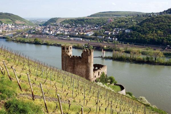 Rüdesheim vineyards