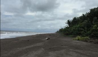 Wide expanses of beach