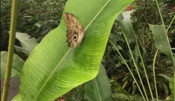 Butterfly farm on the way to Tortuguero