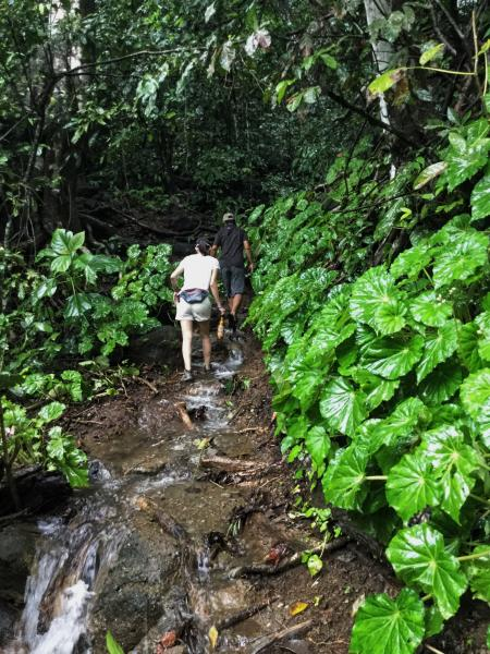 Hiking in Corcovado National Park