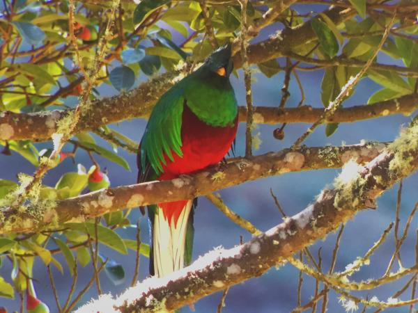 Quetzal in the Savegre Valley