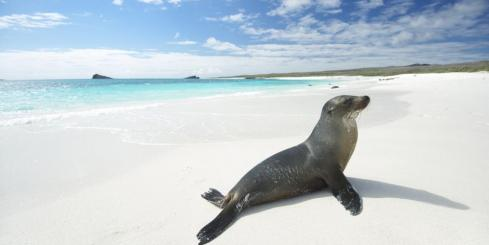 Sea lion on a pristine beach