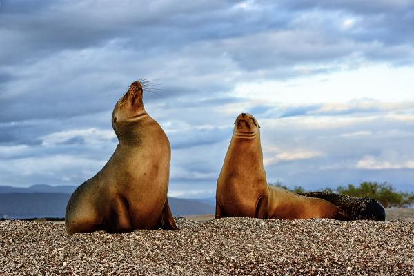 Sea lions on Fernandina Island