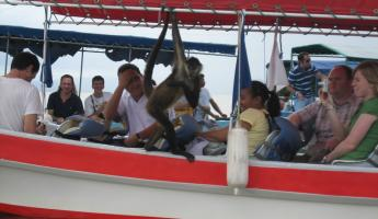 This mischievious monkey jumped onto a boat