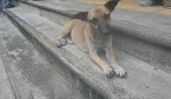 cute dog on the steps of our hotel