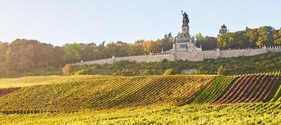 Vineyard underneath the Niederwald Monument, Rudesheim, Germany