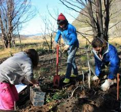 Local high school students participate in reforestation of Torres del Paine during the campaign 20 mil lengas para Paine