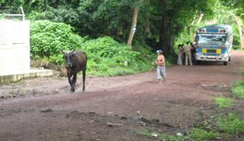 some of the things you will see on a road in Nicaragua