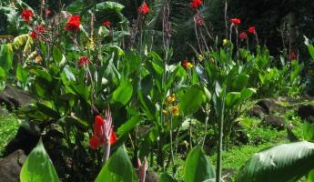 Flowers on Ometepe Island