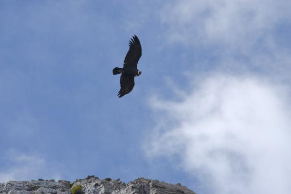 A majestic condor flew right over us on our way to the glacier.