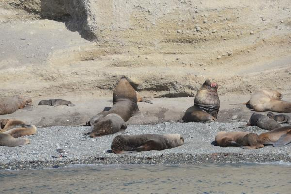 Sea Lions on Isla Marta