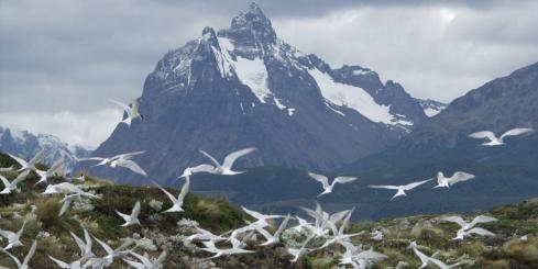Incredible mountains and wildlife at the end of the world.