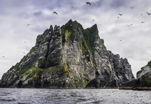 Seabirds flying over dramatic ocean island cliffs St Kilda