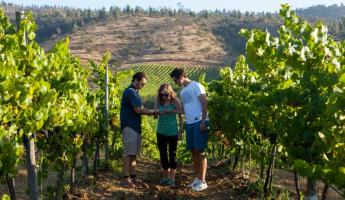 Chile Wine Adventure