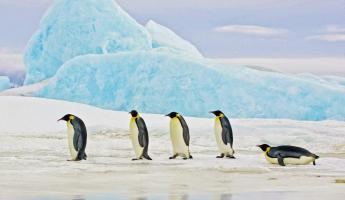 Penguins in the Antarctic landscape