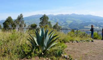 Agave plant with a view of the surrounding mountains.