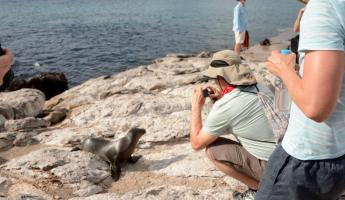 Snapping shots of baby sea lions!
