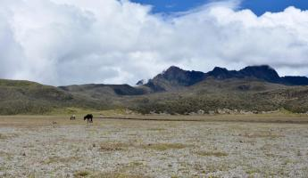Wild horses in Cotopaxi National Park.