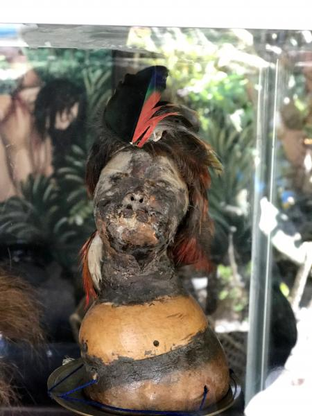 Shrunken head at the Middle of the World Museum.