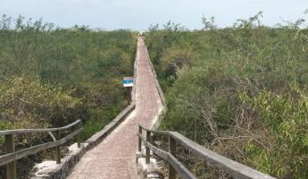 The path leading to Tortuga Bay.