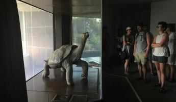 The Lonesome George exhibit at the Darwin Center.